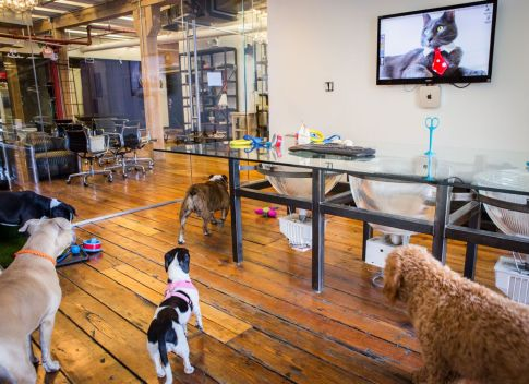 some-of-our-furry-friends-during-take-your-dog-to-work-day